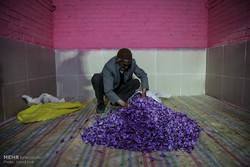 بازار مشتقه زعفران راه اندازی می شود/واسطههای کیف به دست حذف می شوند