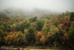 Hircani Forest