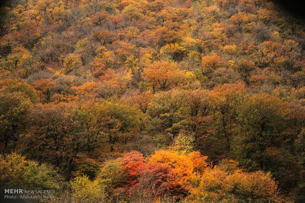 طرح جایگزین استفاده از ظرفیت منابع جنگلی تهیه شود