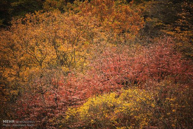 الطبيعة الخريفية في غابات هيركاني بشمال إيران