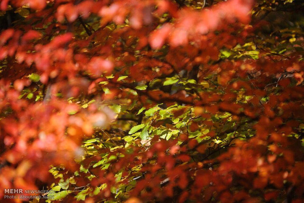طبیعت پاییزی پارک ملی گلستان
