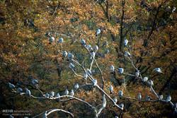 طبیعت پاییزه حیات وحش در پارک ملی گلستان