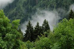 افزایش میزان جذب دی اکسید کربن در گیاهان/ فیلم