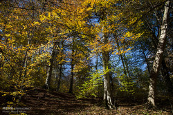Autumn in Waz Forest