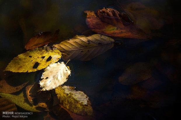 Düşen yaprakların mevsimi