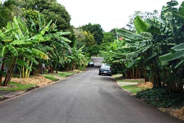 خیابان هایی که میوه رایگان پرورش می دهند