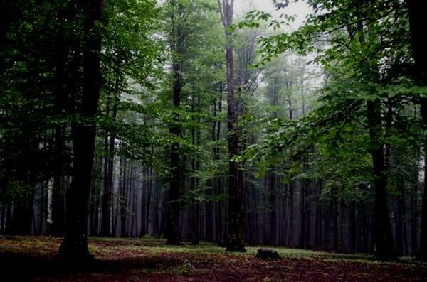 بهره برداری تجاری و صنعتی از جنگل های کشور ممنوع شد