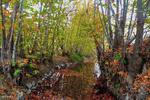 طبیعت پاییزی روستای دره صیدی بروجرد