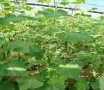 افزایش ۶۰ هزارمیلیاردی بودجه بخش کشاورزی در برنامه ششم توسعه