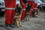 ۱۴ سگ زنده یاب در جستجوی مفقودین حادثه پلاسکو