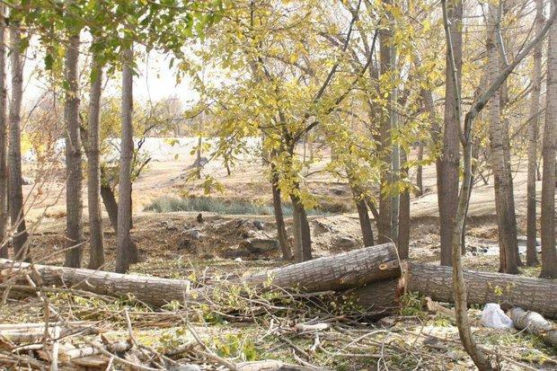 کراپشده - تخریب باغ در همدان - حسین زندی - دره مرادبیک