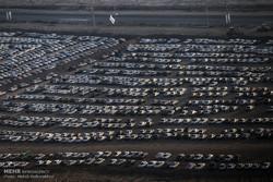 قیمت پارک خودرو در مزرهای چذابه و شلمچه اعلام میشود