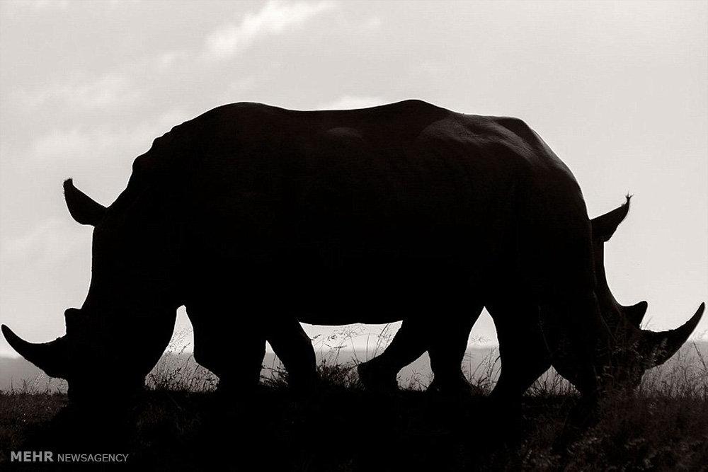 تصاویر زیبا از حیات وحش