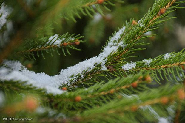 بارش برف پاییزی در گرگان / عکس : نورا جعفری