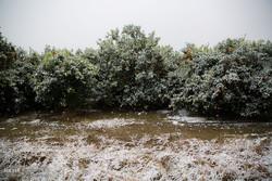 سرما و یخبندان ۵۷ میلیارد ریال به کشاورزان شاهرودی خسارت وارد کرد