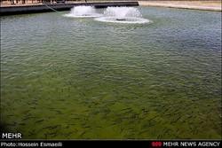 نمونه گیری از ۲۹ مزرعه پرورش ماهی در استان همدان