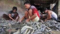 ویت نام میں ایک بس سے120 کوبرا سانپ برآمد