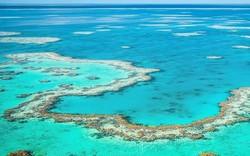 همکاری شیلات با محیط زیست/ احیای زیستگاههای تخریب شده مرجانی