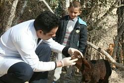 خدمات رایگان دامپزشکی در استان کرمانشاه ارائه شد