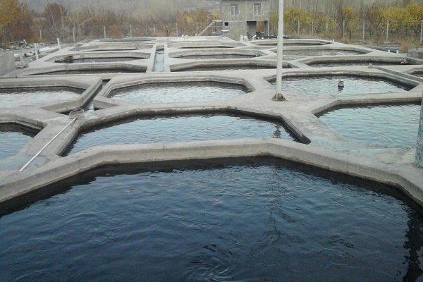 ۴۳۰۰ قطعه بچه ماهی در استخرهای کشاورزی زرند رهاسازی شد
