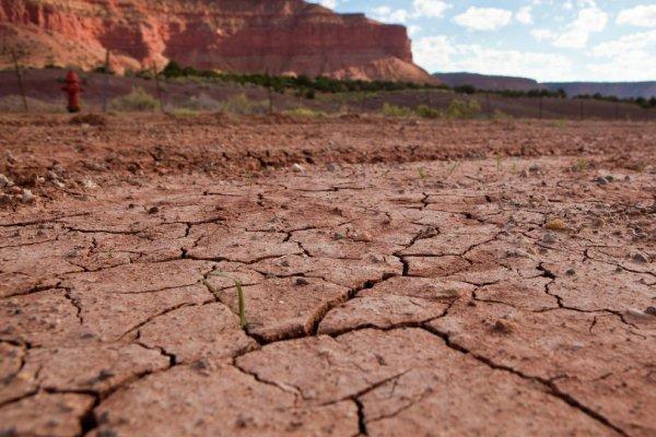 کاهش دانه های غذایی با گرمایش جهانی/ افزایش تعداد آفات گیاهی
