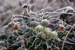 نفوذ هسته سرد سیبری به گلستان و پیش بینی یخبندان و مه صبحگاهی