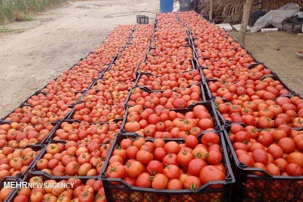 آبدان گوجه فرنگی