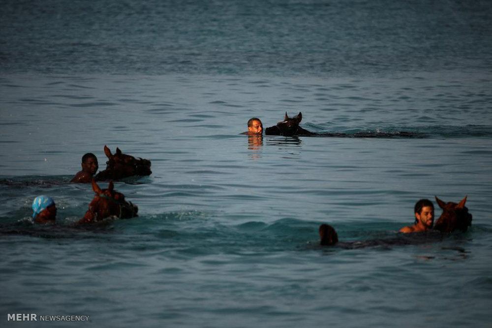 شنا با اسب ها