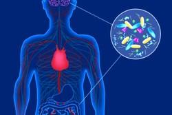 پارکینسون از تشکیل پروتئینی در روده آغاز می شود