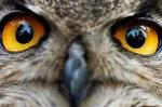 حسگر تصویری چشم جغد ساخته شد