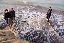Fishing along coasts of Miankaleh