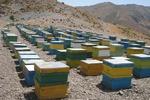 ۱۶۰ هزار کندو زنبور عسل در چهارمحال و بختیاری وجود دارد