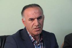 ۳۶۰۰ تن ذرت خشک از کشاورزان قزوین خریداری شد