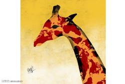 انقراض و پایان قصه زرافهها