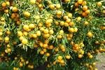 همایش کشاورزی پایدار باحضور ۴۸کشور خارجی برگزار میشود