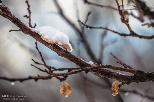 Qazvin under snow