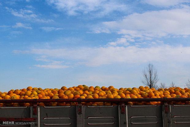 تغییرات نرخ محصولات کشاورزی در سال ۹۷/ افزایش ۷ درصدی نرخ دستمزد