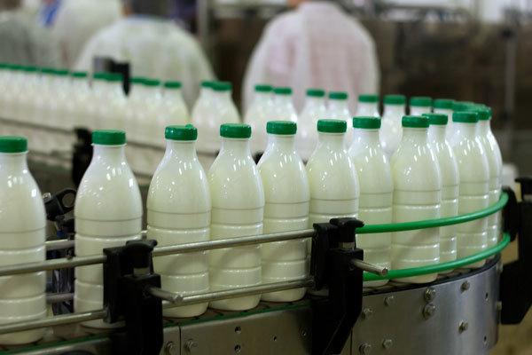 کارخانجات شیر را ارزان میخرند/دولت پول دامداران را نداد