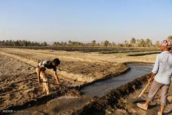 تغییر الگوی کشت در مناطق کم آب استان همدان اجتناب ناپذیر است