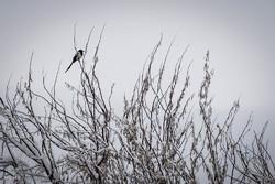 بارش برف در اولین روز زمستان در شاهرود