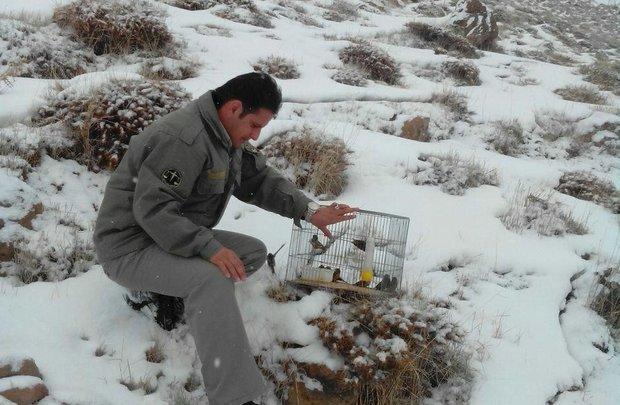 دستگیری صیاد پرندگان زینتی