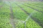 ۱۶ طرح کشاورزی در بافت به بهره برداری می رسد