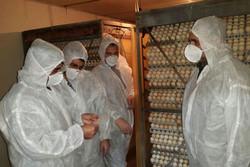 افزایش نگرانی در خصوص شیوع آنفلوانزا از طریق کودهای مرغی