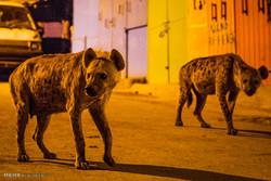 تصاویر برگزیده حیات وحش در هفته گذشته