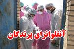 بیماری آنفلوانزای پرندگان در مازندران کنترل شد