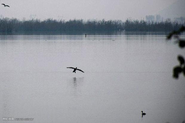 Estil Lagoon home to special migrating birds