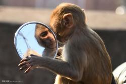تصاویر شگفت انگیز از حیوانات در سال 2016