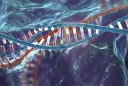 آموزش قدرتمندترین زبان برنامه نویسی کاربردی در علم ژنتیک جمعیت