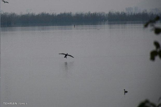 Astara Steel Lake welcomes wintering birds
