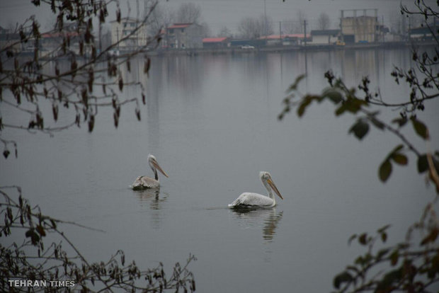 Astara Steel Lake welcomes wintering birds